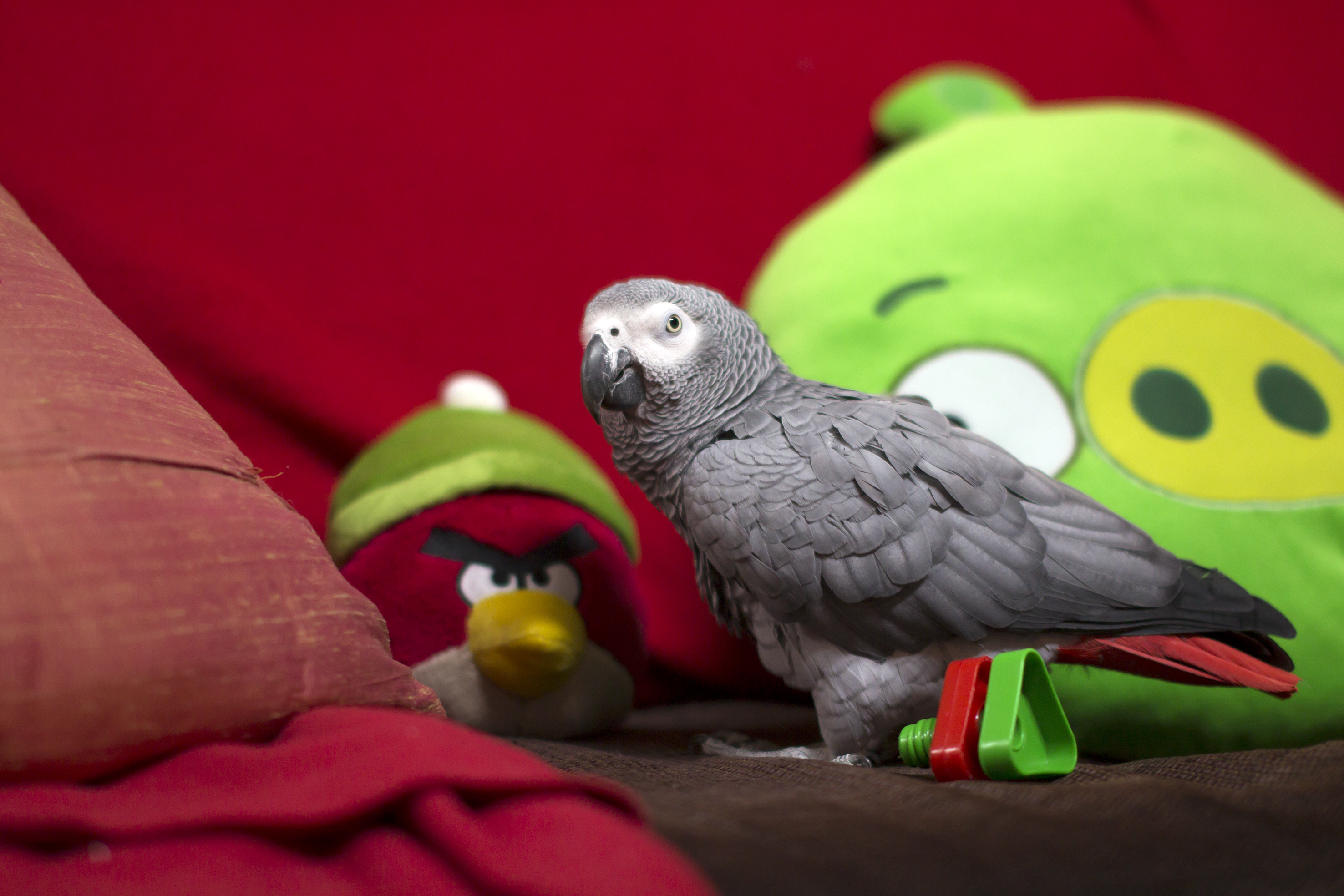 Roope & angry birds :)